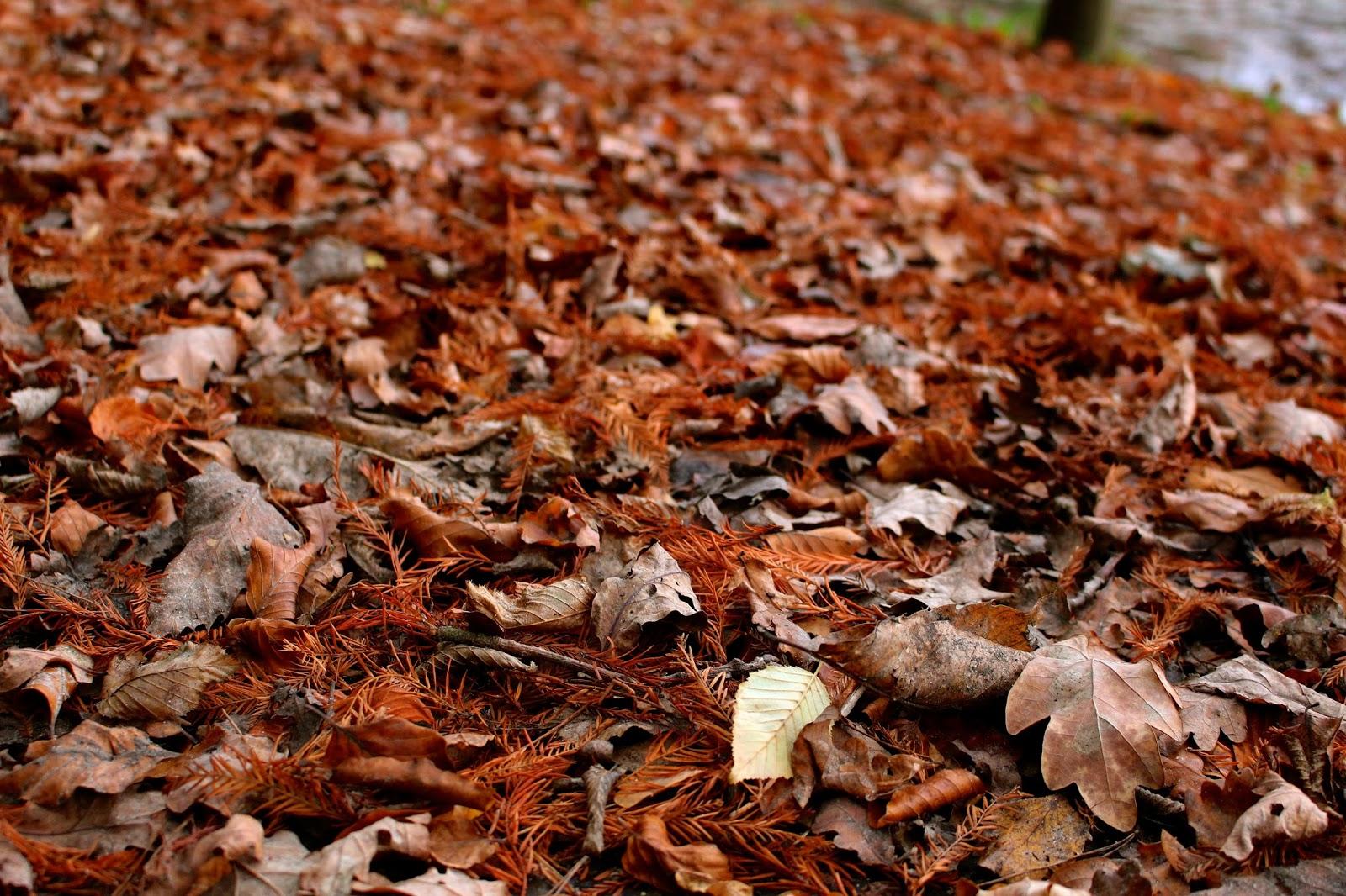 Autumn Leaves Orange Photography