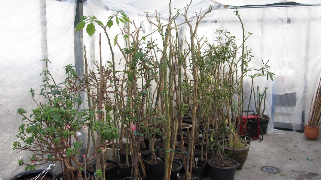 herding av planter