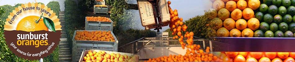 Sunburst Oranges