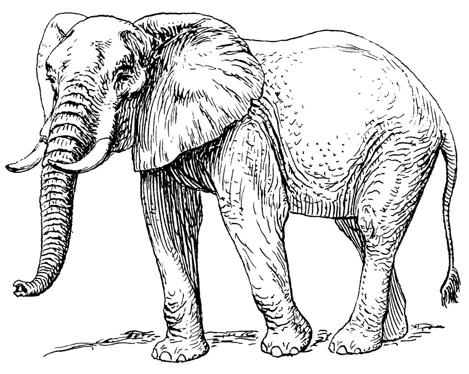 hd wallpapers free different types elephant high resolution hd 1920X1080 HD City Wallpapers funny elephant hd wallpapers scrathed elephant hd wallpapers unseen elephant hd wallpapers elephant bathing wallpapers elephant fight hd wallpapers