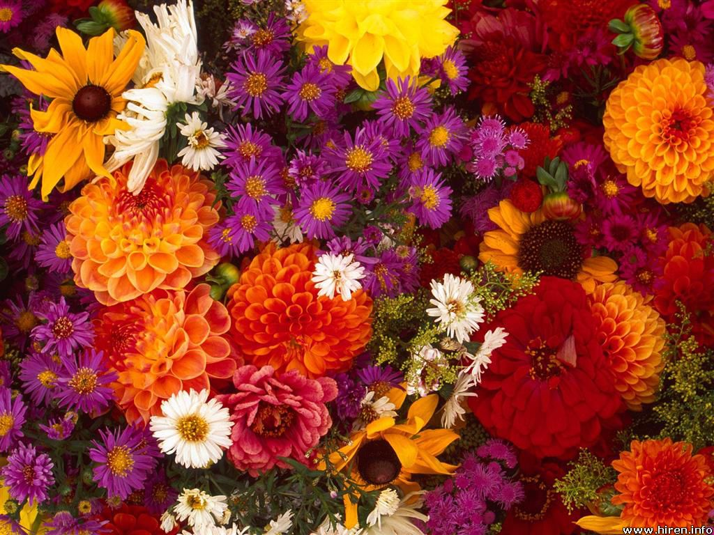 Wallpapers spring flowers background for Popular fall flowers