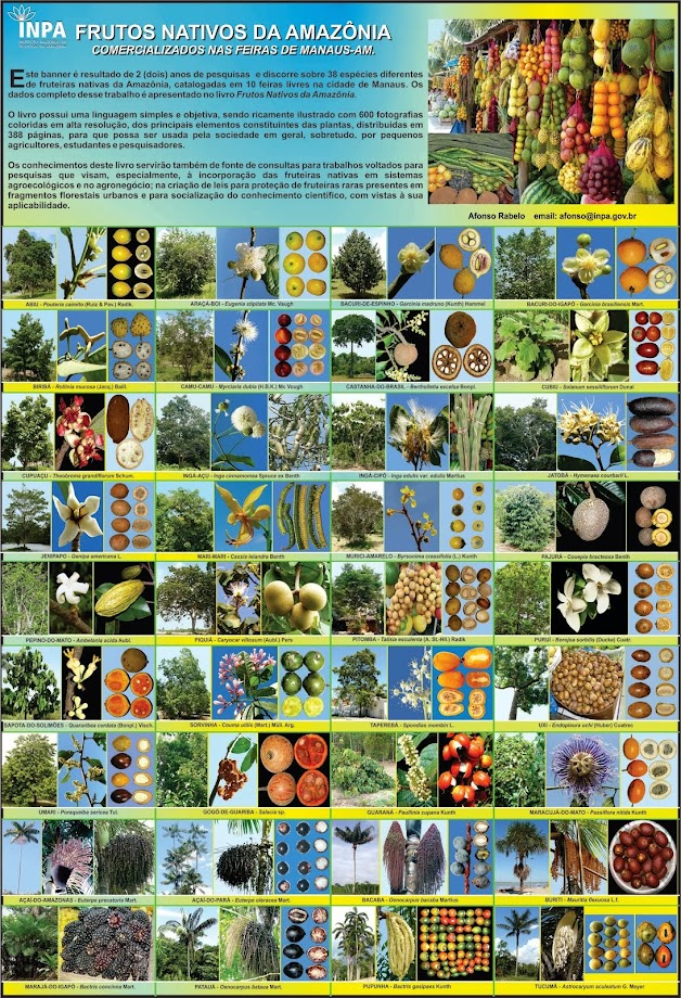 Frutos Nativos da Amazônia-Afonso Rabelo-CBIO-INPA