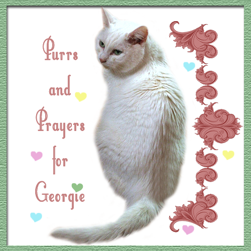 Purrs for Georgie