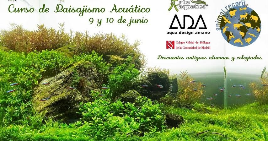 Arte aquatico curso paisajismo acuatico for Curso paisajismo
