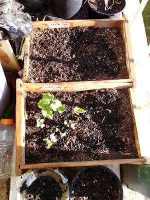 Desk Drawer Garden Plants