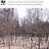 Ο οικολογικός απολογισμός της πυρκαγιάς στη Λαυρεωτική από το WWF