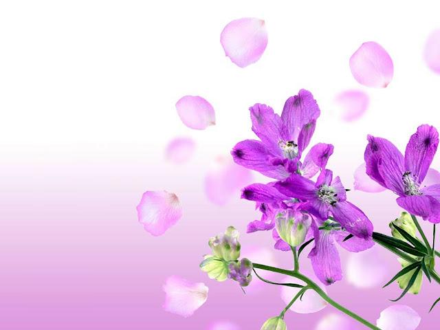 Contoh Background Pada Kartu Nama Dengan Menggunakan Konsep Bunga Yang