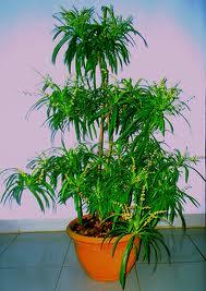 faktor-faktor yang mempengaruhi pertumbuhan pada tanaman