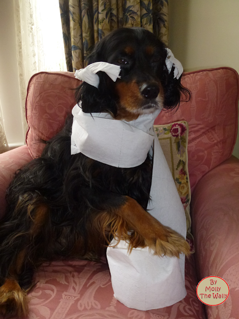 Molly The Wally & The Issue of Toilet Paper!