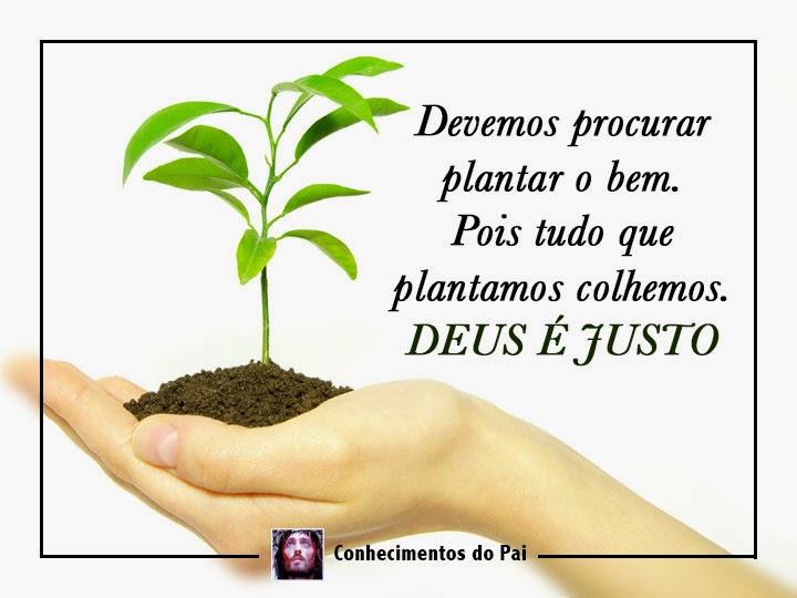 Tudo que plantamos colhemos - Deus é justo