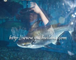 Ikan Yu Ganjil