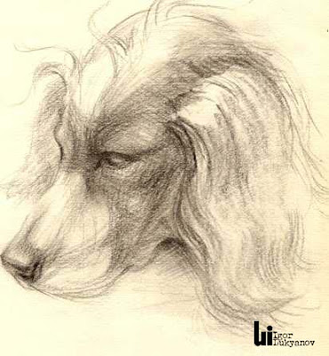 dog sketching by Igor Lukyanov (cross-hatching)