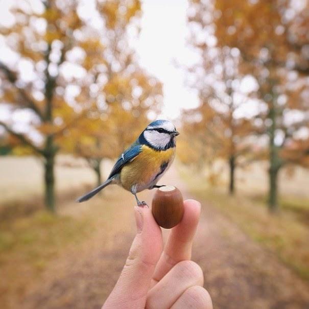 wildlife photography feeding animals konsta  punkka-10