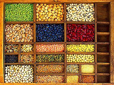 Ροδόπη: Μαθήματα για την καλλιέργεια οσπρίων