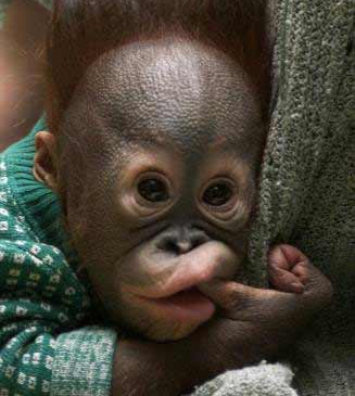 Funny Baby Monkey Pictures