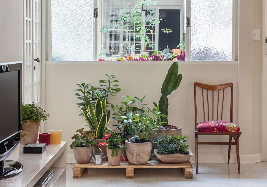 Blog da decora o um jardim feito com plantas resistentes for Fotos de plantas de interior