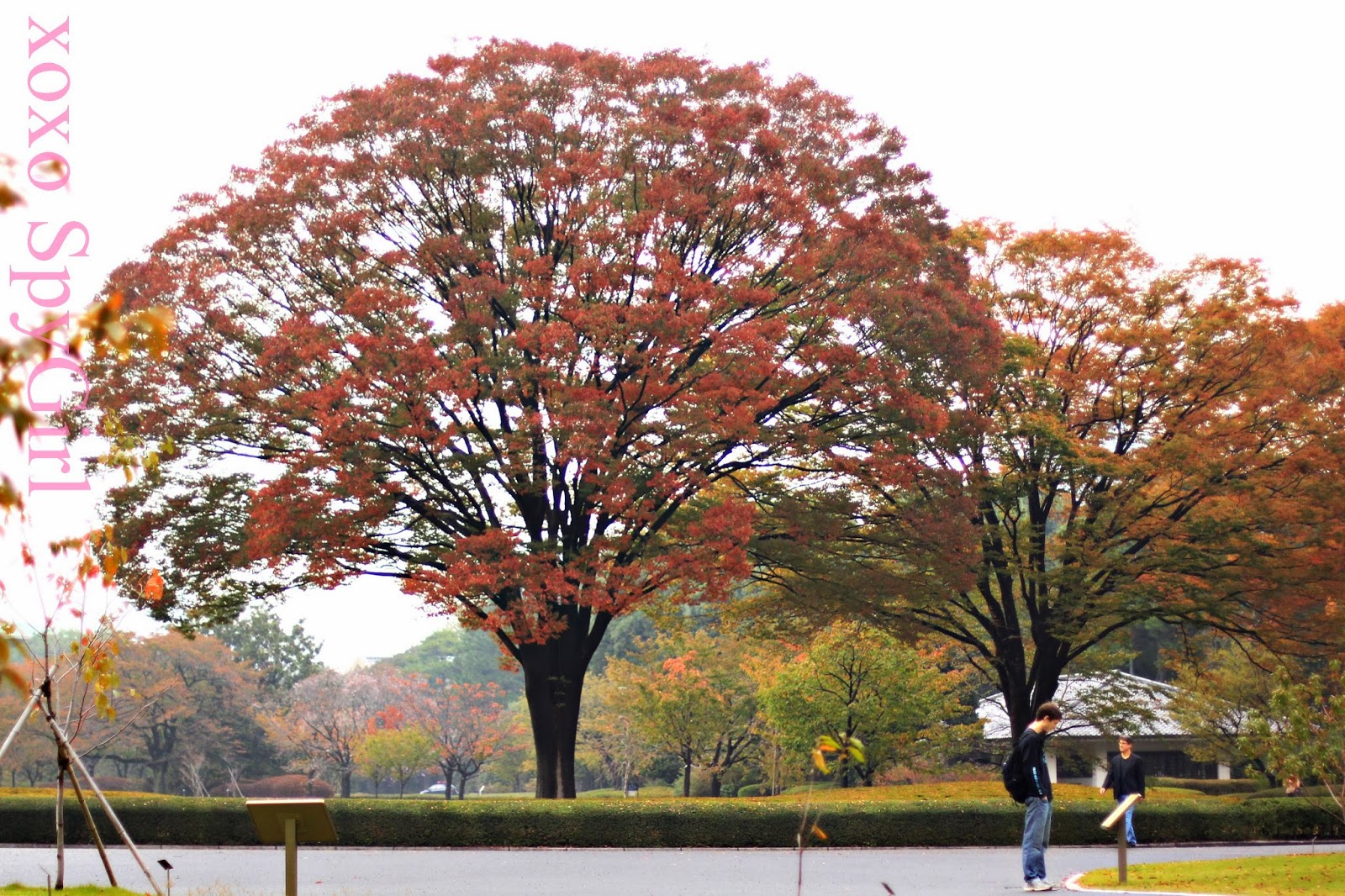 Autumn in the gardens of the Imperial Palace |singlerockworld A ...