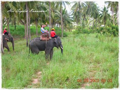 Bangkok, Fil safarisi
