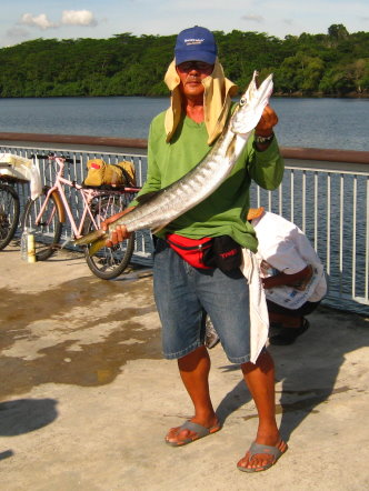 Yellowtail Barracuda [Sphyraena Flavicauda] also know as Saw Kun 沙君 [Hokkien] or Ikan Kacang [malay] weighing 4kg plus caught by Ah Tan at Woodland Jetty on 10th July 2013 using live Five-spot Herring or Assam fish (local), Selangat (malay) on float.