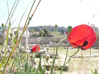 Atene, papaveri tra i resti dell'Agorà a primavera - Foto di Elisa Chisana Hoshi
