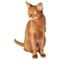 funny sitting cat