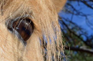 The horse´s eye is a mirror of your soul
