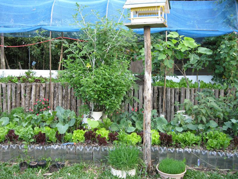 Plantando o Verde e o Verbo Horta, pomar e paisagismo natural  Nosso