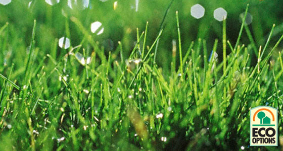 http://gardenclub.homedepot.com/5-easy-eco-secrets-for-a-greener-lawn/