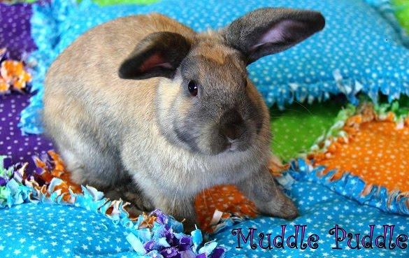 Muddle Puddle