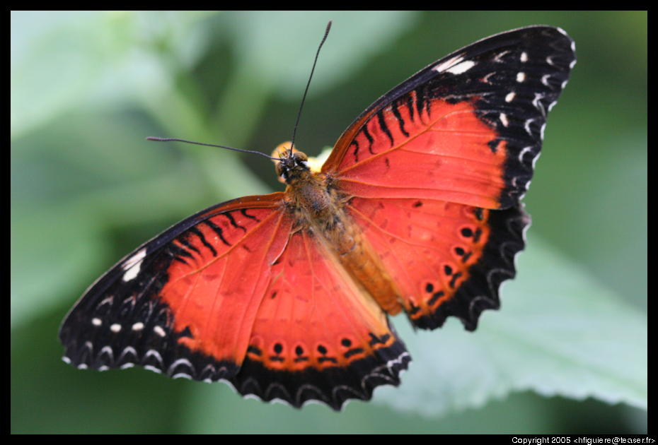 Live butterflies |Funny Animal Pictures Of Butterflies