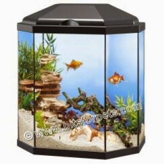 Health tech pets sports green living for Cheap fish tank