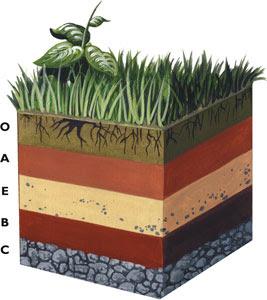 Noti geo perfil y tipos de suelo for Perfil del suelo wikipedia