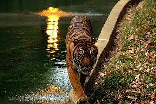 ملف كامل عن اجمل واروع الصور للحيوانات  المفترسة   حيوانات الغابة  291483999_0412cf1df9
