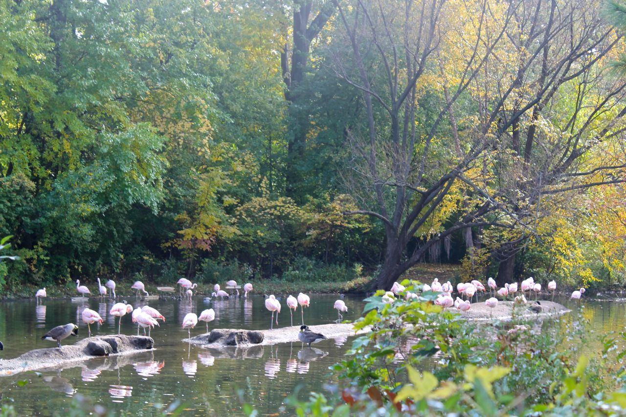 At The Bronx Zoo In A New York Autumn