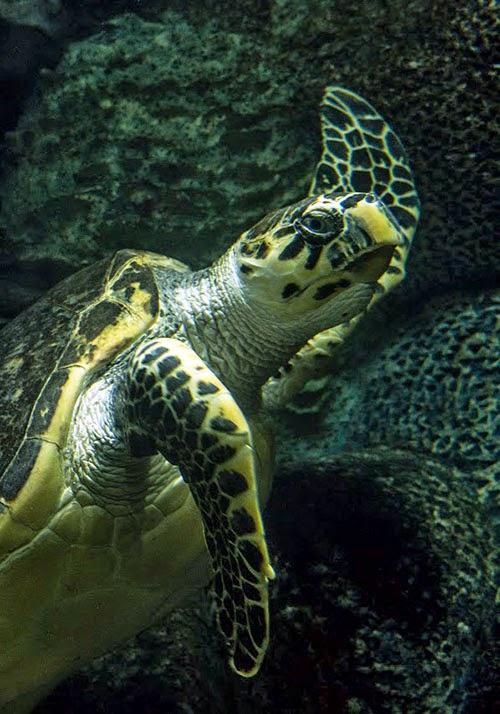 Черепаха в киевском зоопарке