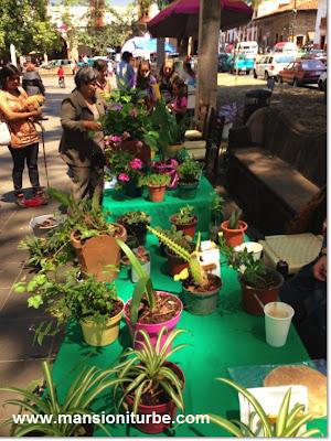 Plant Exchange in Patzcuaro