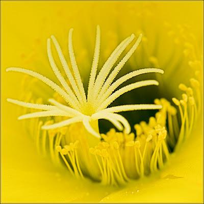 macro flower photography tips