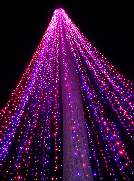 Garden Lights, Holiday Nights (Atlanta Botanical Garden)
