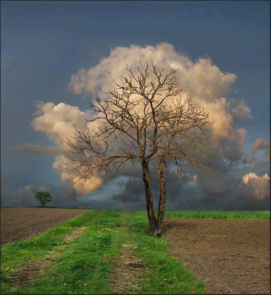fotografía árbol nubes