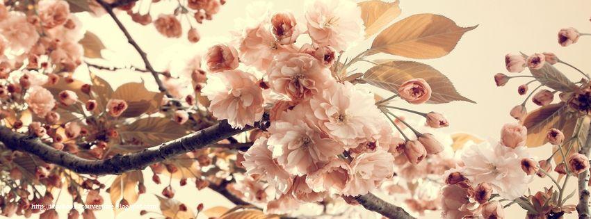 Groupe des images pour couverture facebook vintage parmi nos plusieurs    Vintage Photography Flowers Facebook Covers