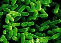 Το E.coli «έφαγε» τον πρόεδρο του ΕΦΕΤ