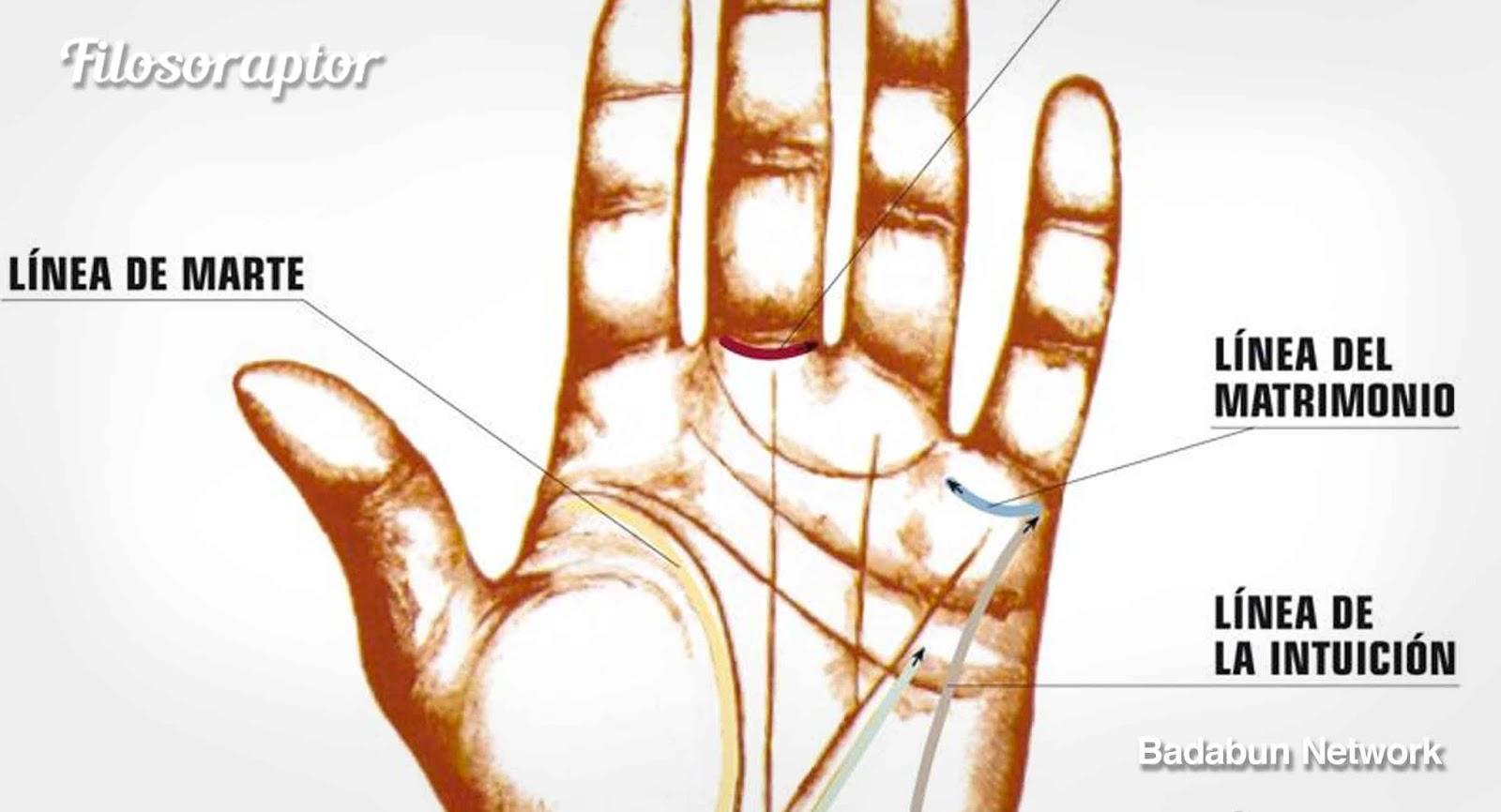 Observa lo que tus l nea de las palmas dicen de ti quiz s - Leer la mano hijos ...