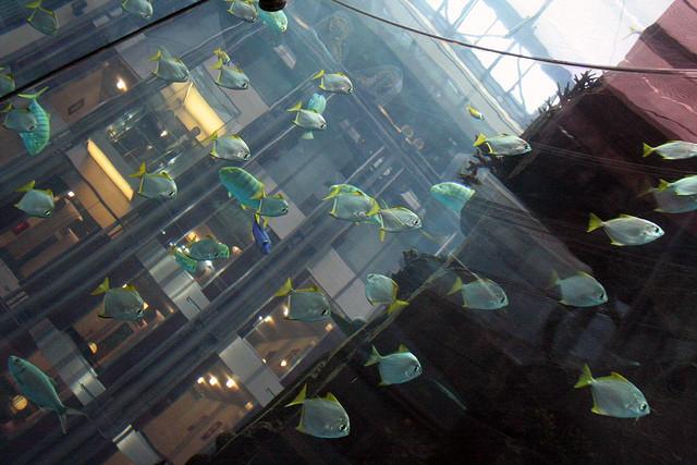 các loài cá tại aquadom