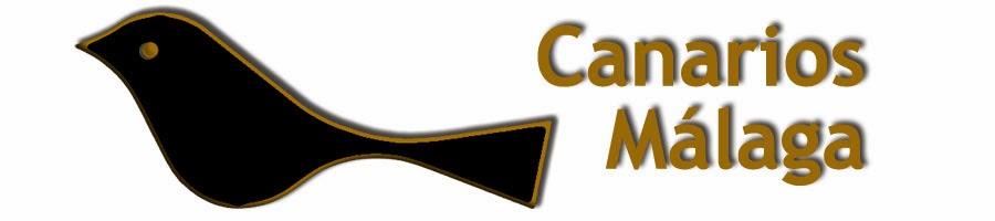 Canarios Málaga