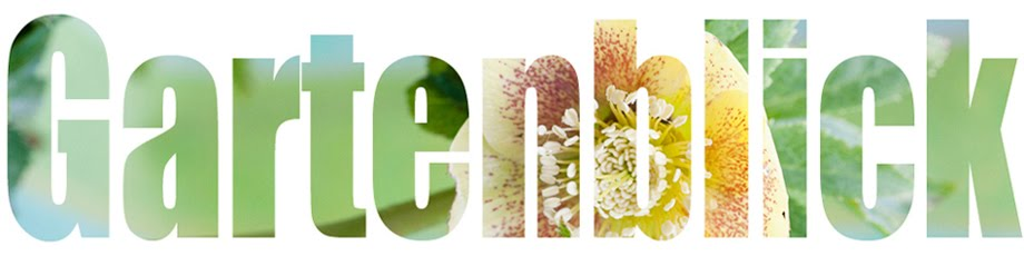 Gartenfotografie - Gartenblick