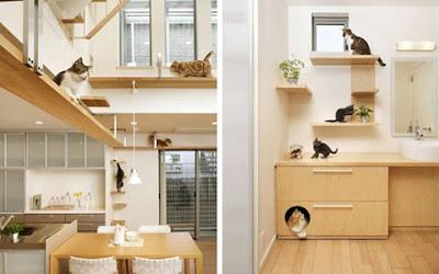 Sebuah perusahaan konstruksi Jepang menawarkan desain rumah khusus bagi pemelihara kucing