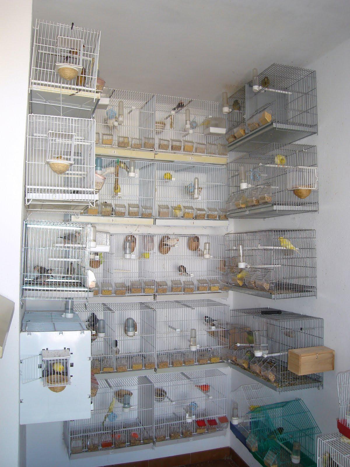Aviario lopez cardenas aviario - Modulos de canarios ...