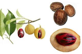 http://www.informasiherbalterbaru.com/2016/02/khasiat-dan-kandungan-buah-pala.html