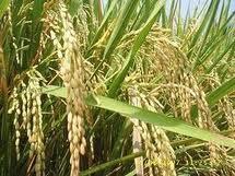 Prinsip ekologi ini meletakkan pertanian organik dalam sistem ekologi kehidupan