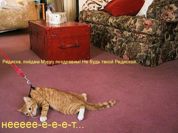 Сегодня всемирный день кошек, ох уж эти кошки